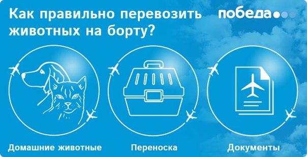 Как правильно перевозить домашних животных на рейсах «Победы»?
