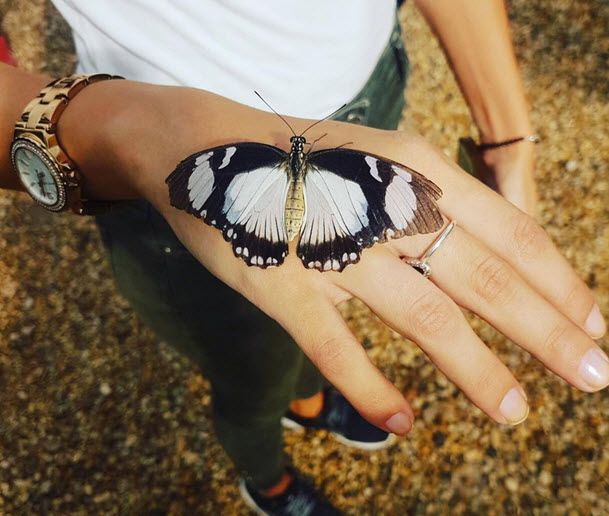 Музей бабочек в Карловых Варах на горе