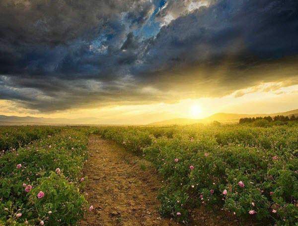 Болгарская Долина роз