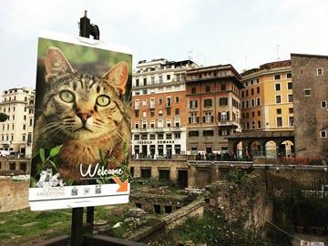 В Риме животных: кошкин дом