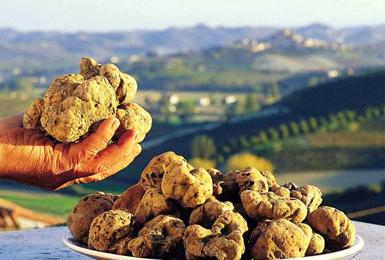 Попробуйте вкусные трюфели в Альбе
